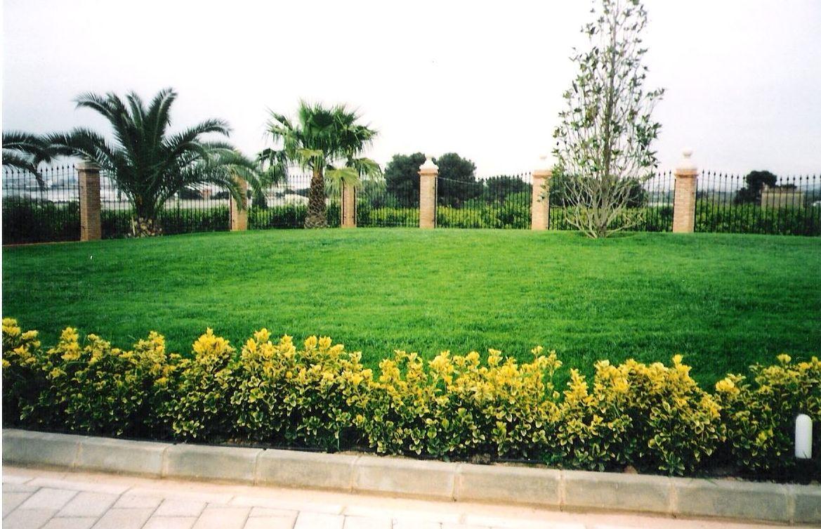 Tratamientos fitosanitarios para jardines en Valencia