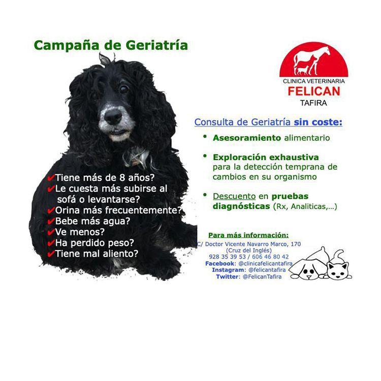 Foto 47 de Veterinarios en  | Atención al Cliente