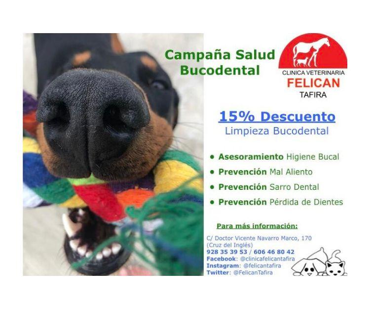 Foto 3 de Veterinarios en  | Clínica Veterinaria Felicán Tafira