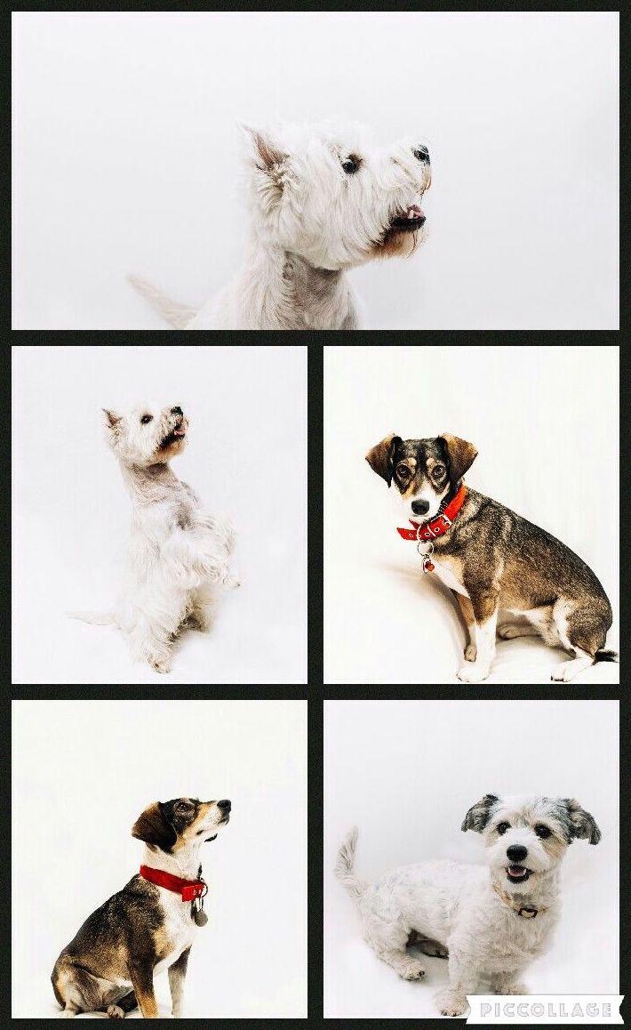 Fotógrafa de mascotas
