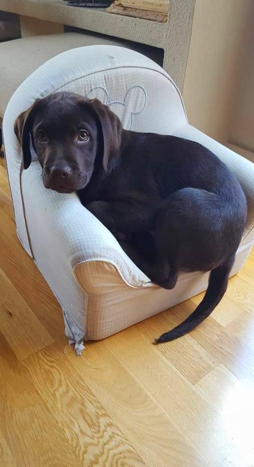 Educación y pre-adiestramiento a cachorros: Servicios de Adiestramiento canino NobleCan