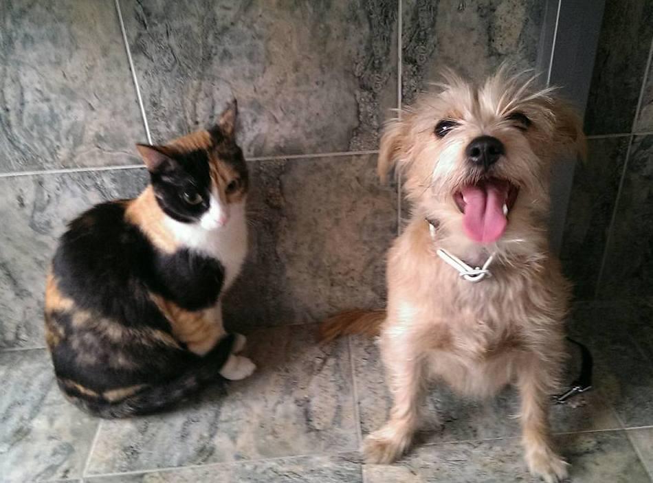 Clases recordatorias: Servicios de Adiestramiento canino NobleCan