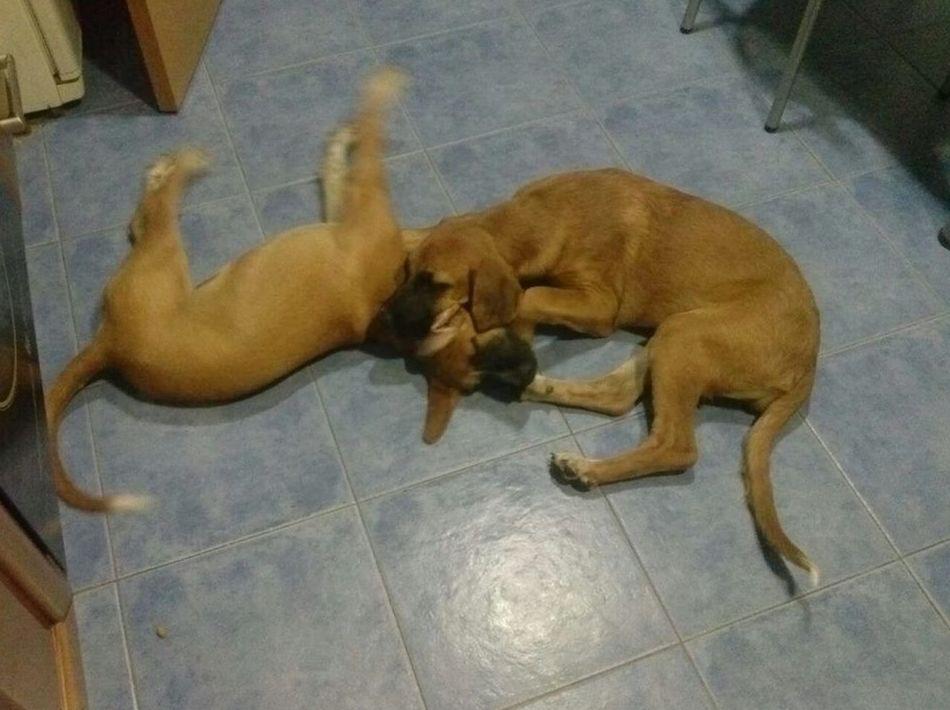 Problemas de comportamiento: Servicios de Adiestramiento canino NobleCan