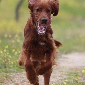 Alojamiento canino: Servicios de Adiestramiento canino NobleCan