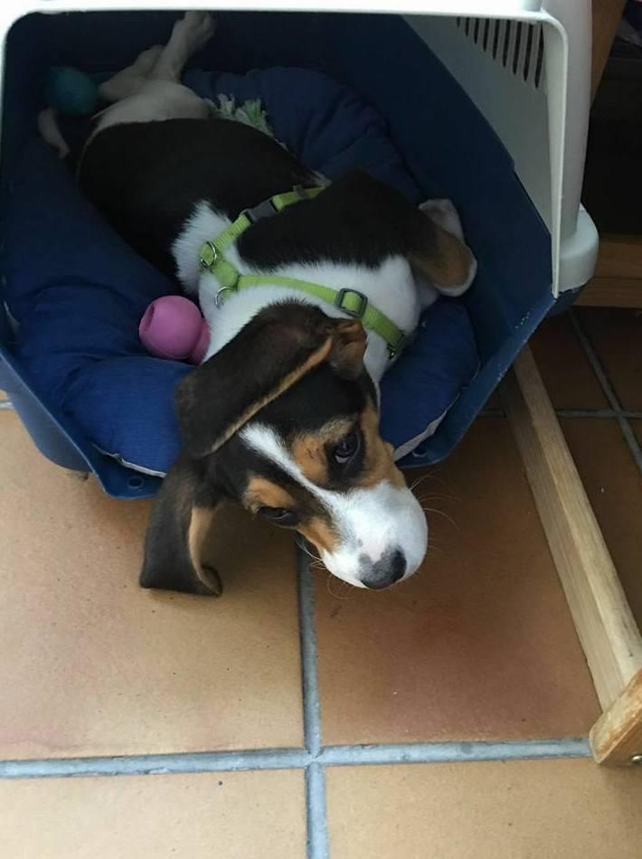 Adiestrador canino en Madrid, con NobleCan