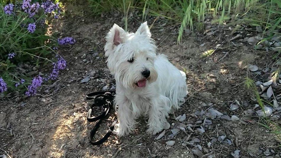 Adiestramiento y trabajos con clicker: Servicios de Adiestramiento canino NobleCan
