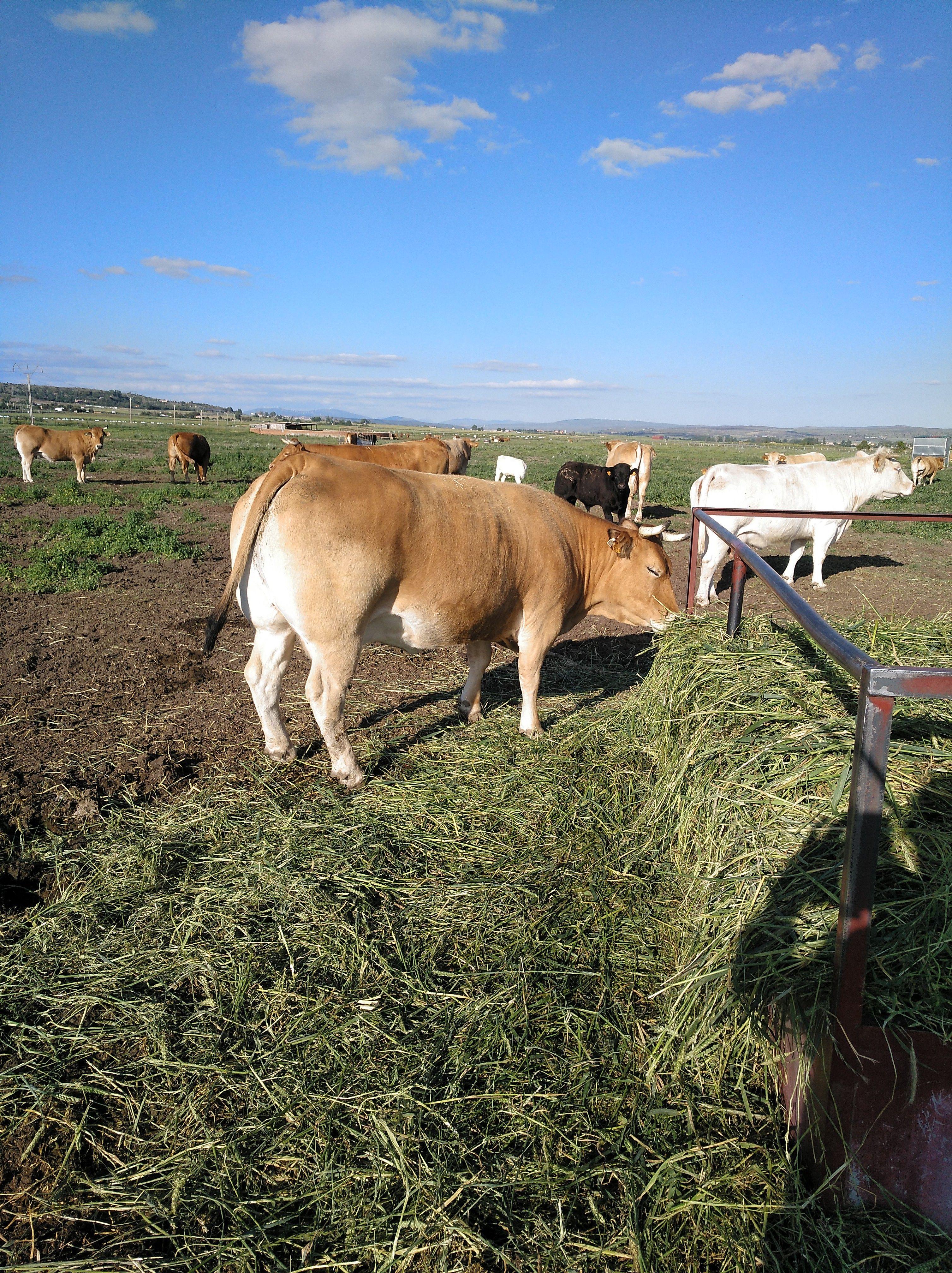Carnicería Muñogalindo con ganadería propia