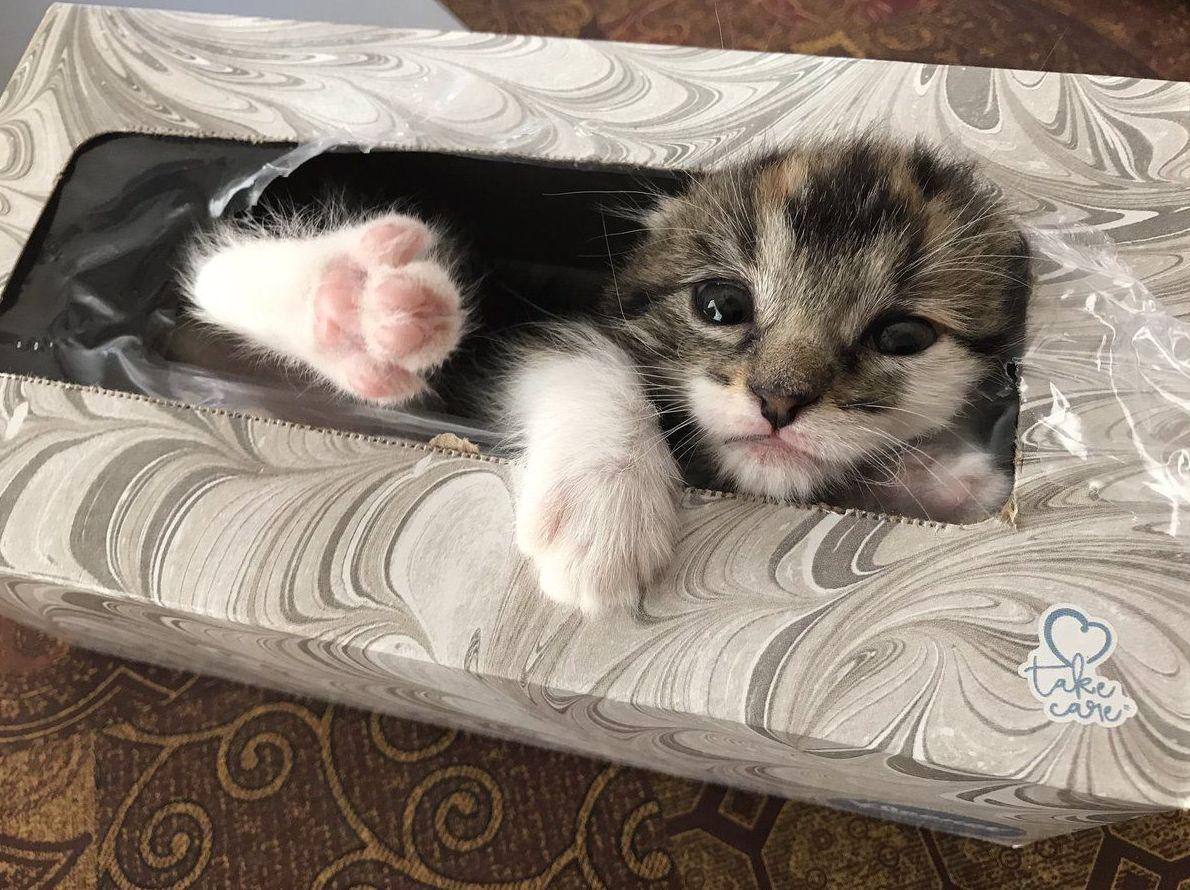 ¿Por qué a los gatos les gusta esconderse?