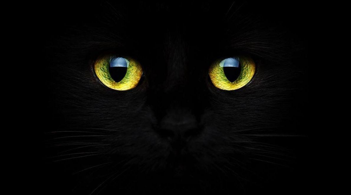 Se detienen las adopciones de gatos negros por Halloween.