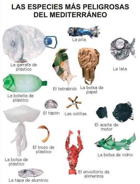 Las especies mas peligrosas del Mediterraneo, Reciclaceite, Reciclaje de residuos