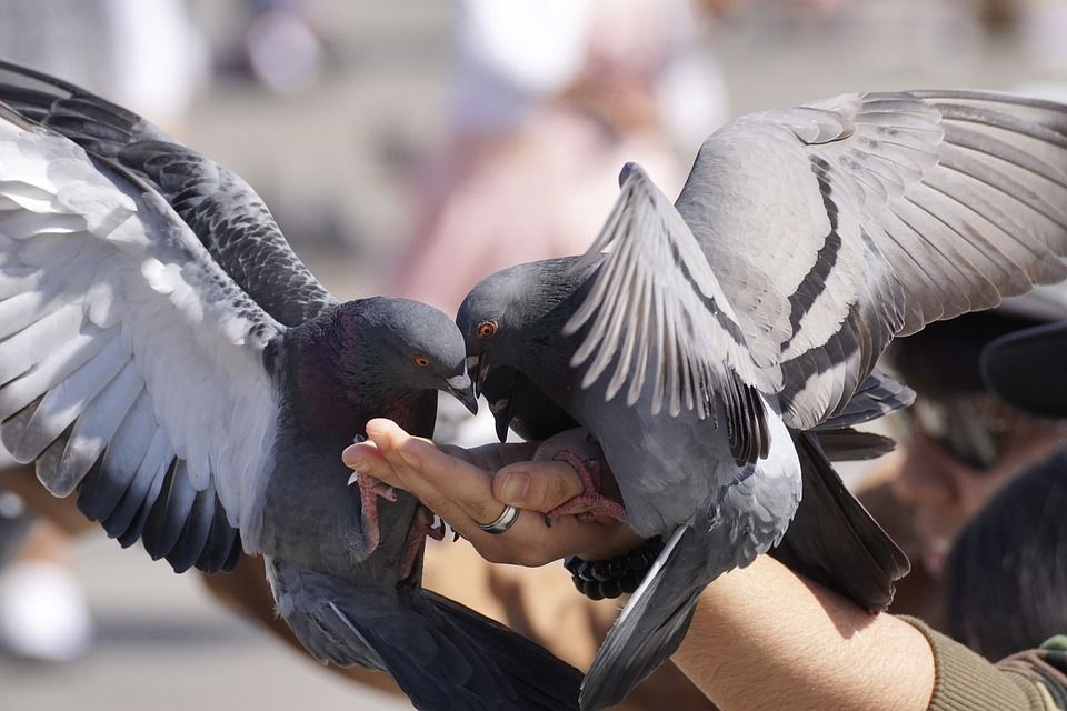 Colocamos pinchos anti palomas