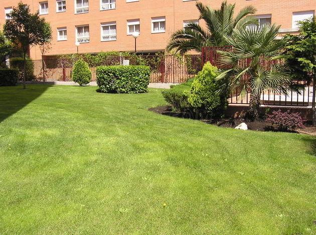 Foto 5 de Diseño y mantenimiento de jardines en  | Jardinería Naranjo
