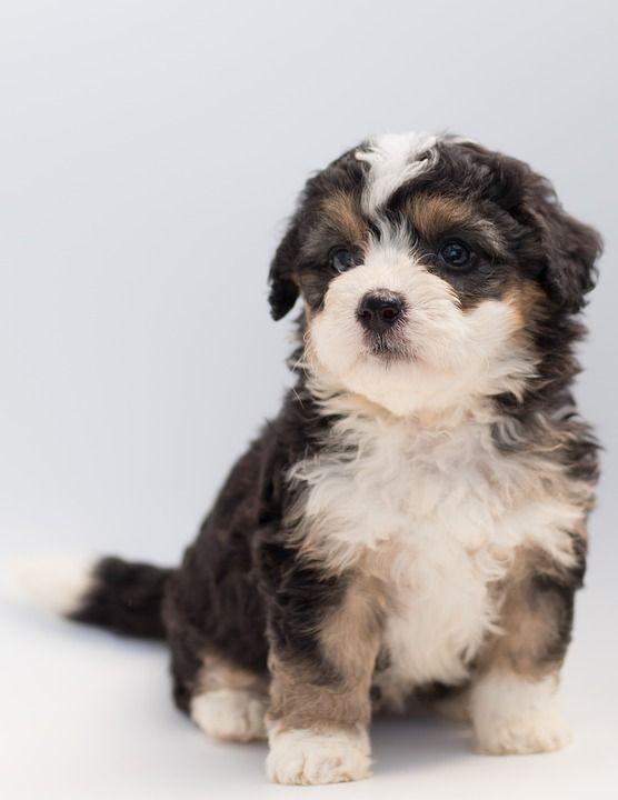 Criador de cachorros: Servicios de Sir Can, Estilismo Canino