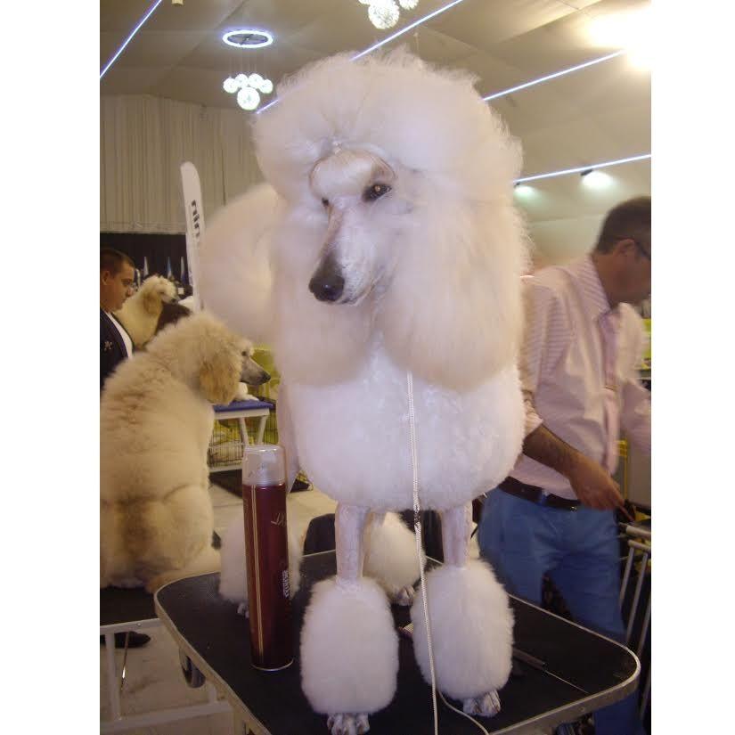 Academia y peluquería canina
