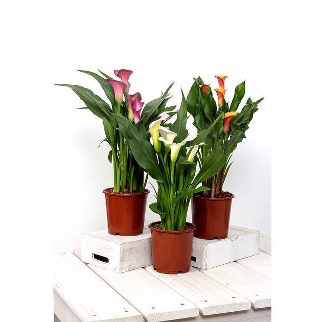 Plantas decorativas: Productos y servicios de Floristería Rosella