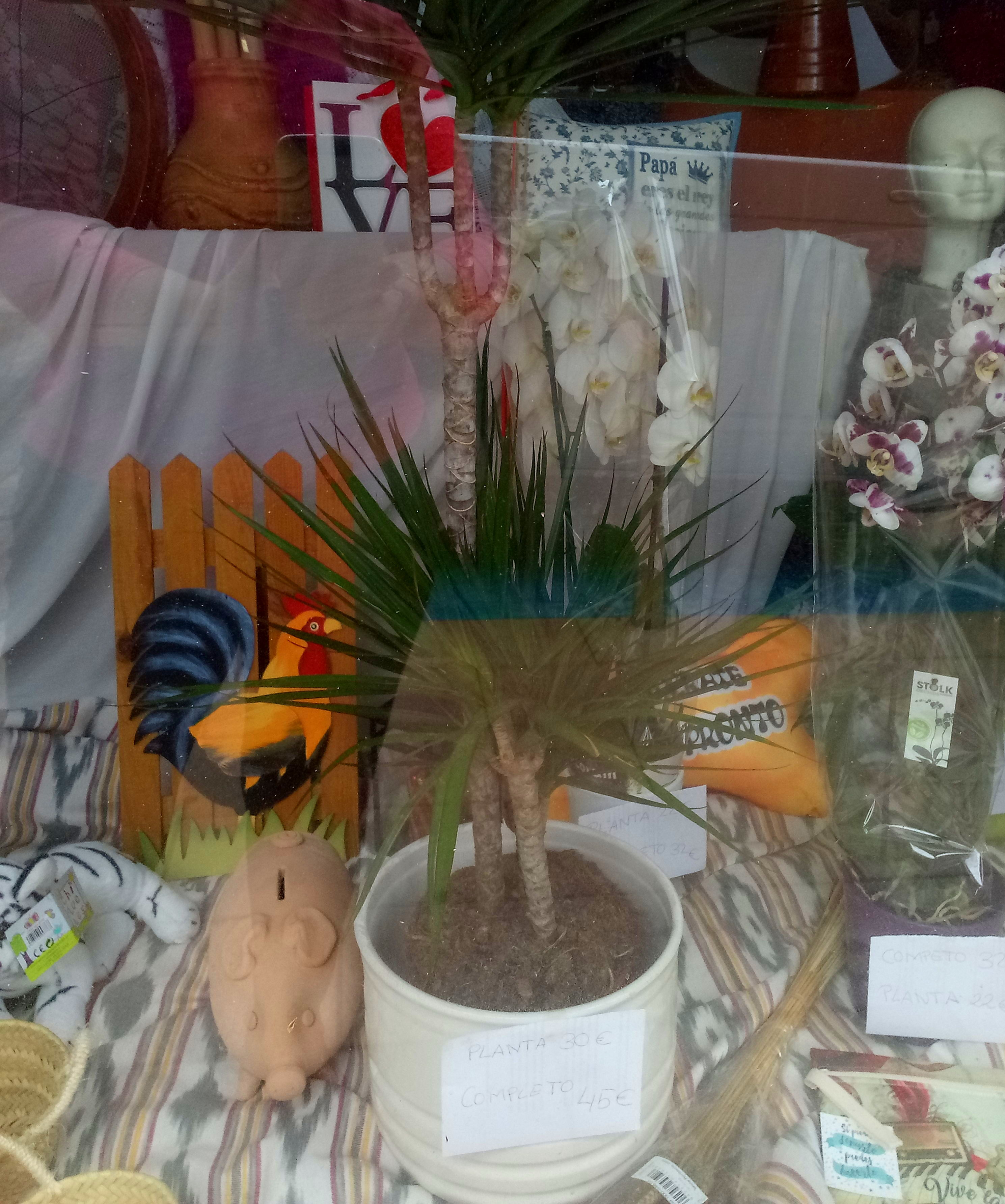 Especial dia de la madre. Orquidea phalaenopsis.
