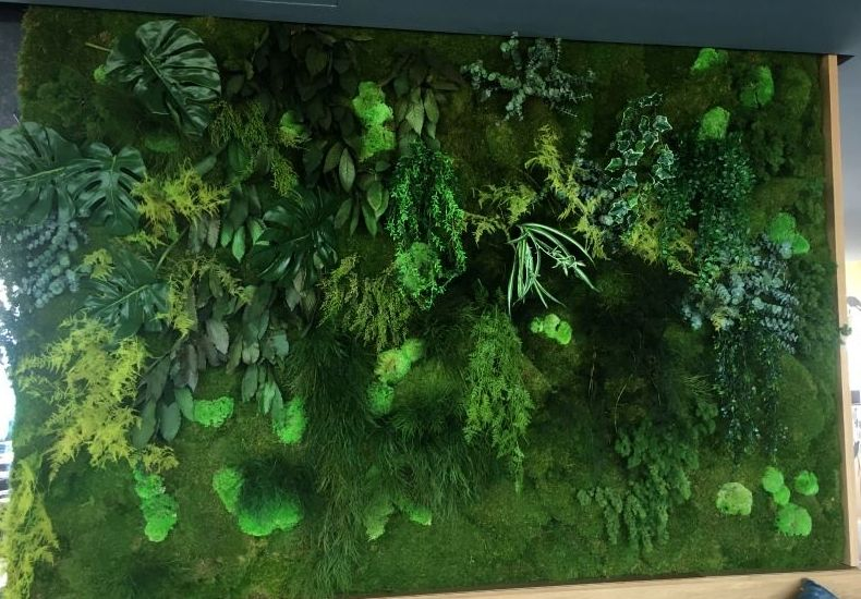 Muro vegetal de planta artificial y preservada