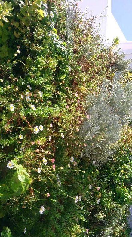 Jardín vertical en ático, tiempo después...