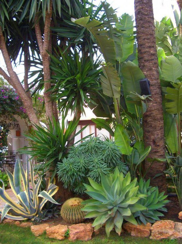 Diseño de jardines de plantas tropicales