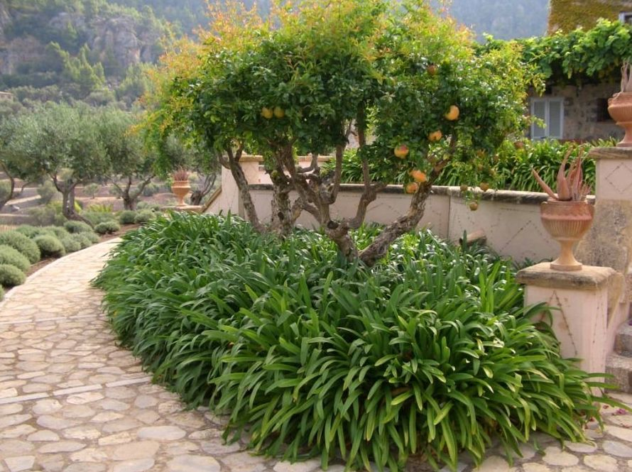 Jardín huerto