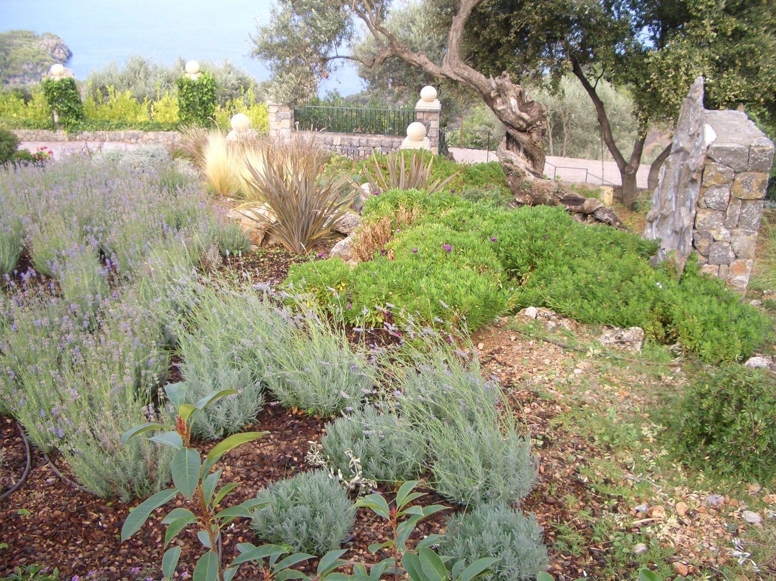 Jardines con aromáticas