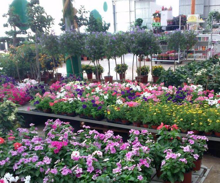 Centro de jardinería en Jaén