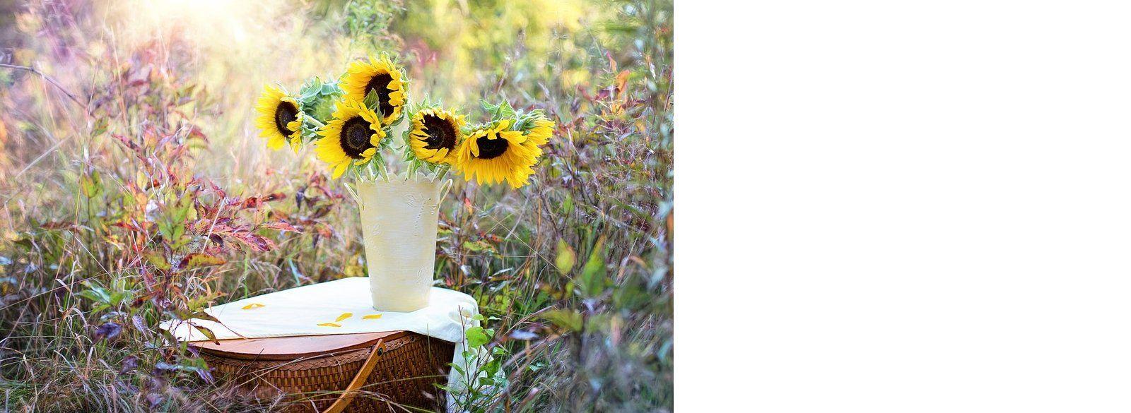 Plantas de Interior: Productos y Servicios de El Jardín de tu Casa