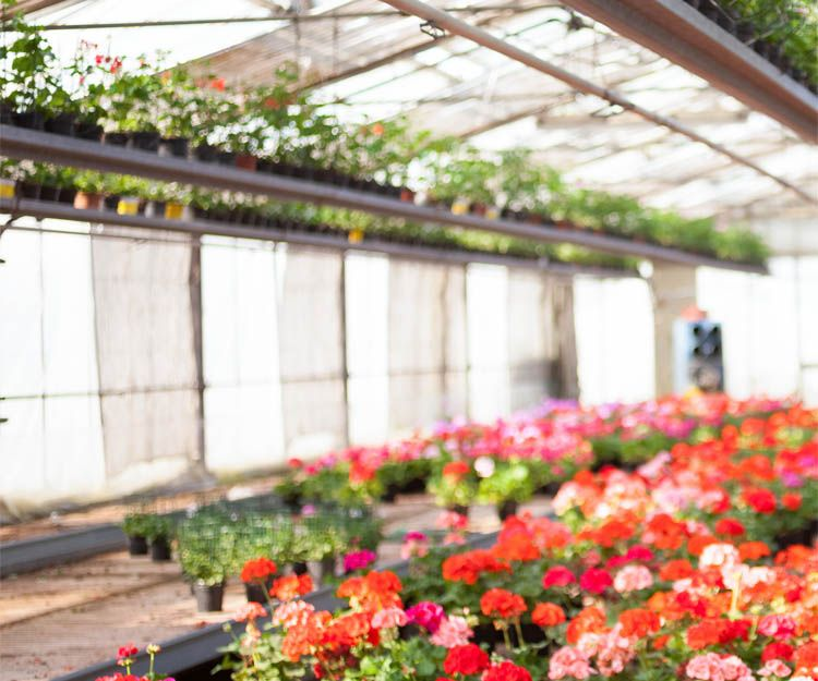 Plantas de interior en Jaén