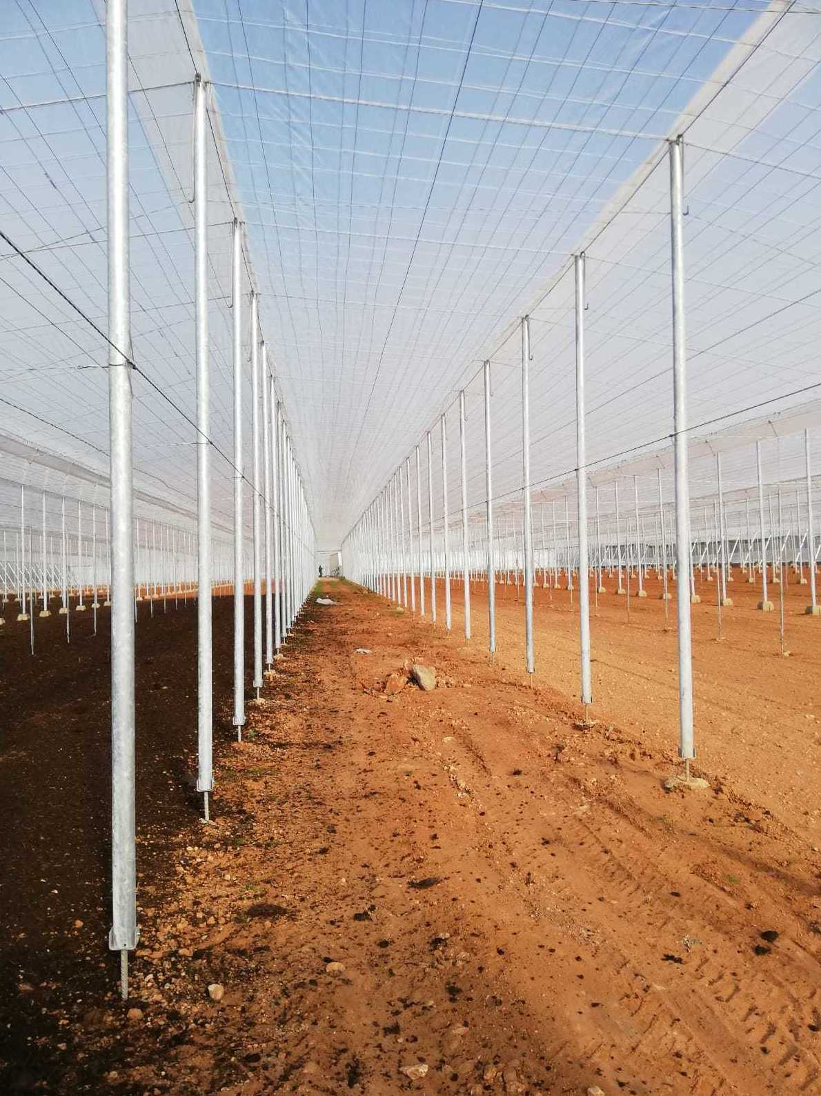 Foto 8 de Estructuras metálicas en  | Coinva Invernaderos