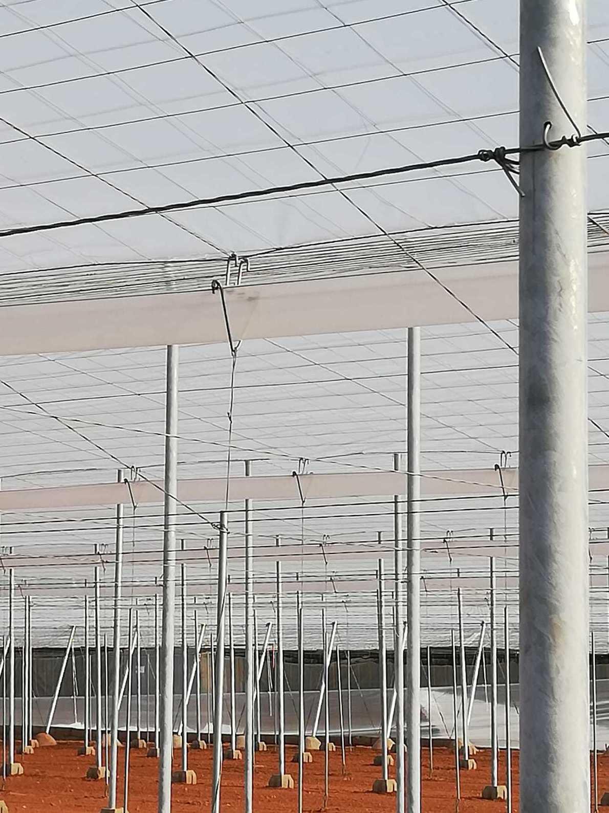 Foto 7 de Estructuras metálicas en  | Coinva Invernaderos
