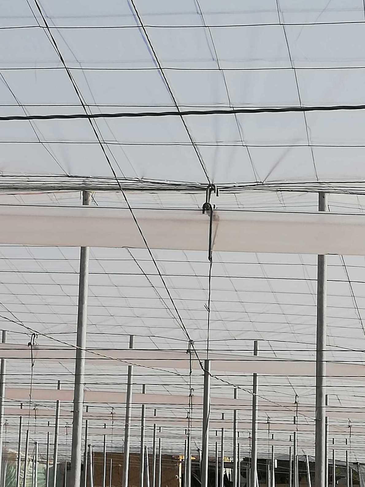 Foto 5 de Estructuras metálicas en  | Coinva Invernaderos