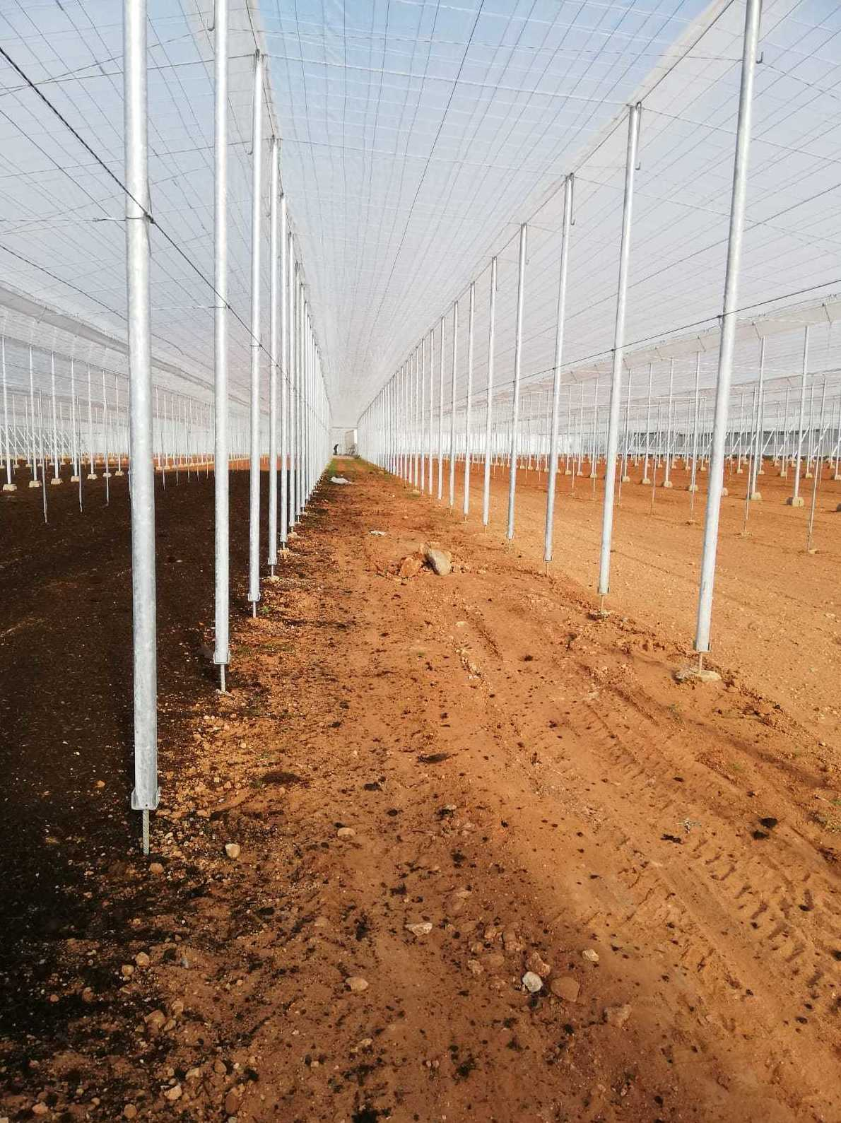 Foto 2 de Estructuras metálicas en  | Coinva Invernaderos