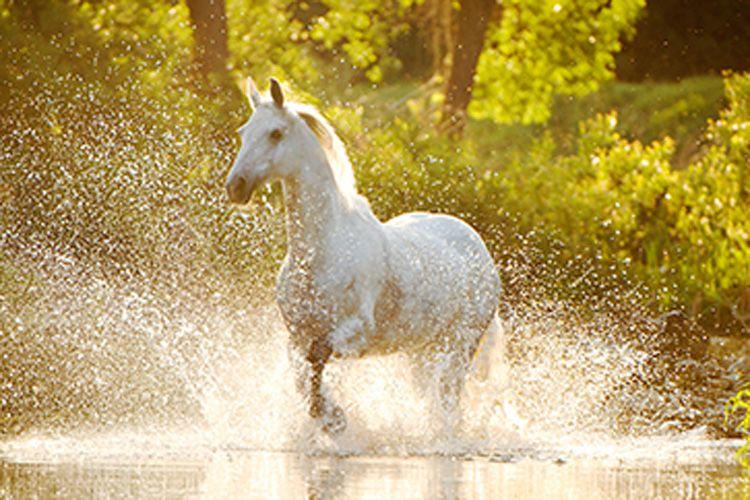 Venta de piensos para caballos en Burgos