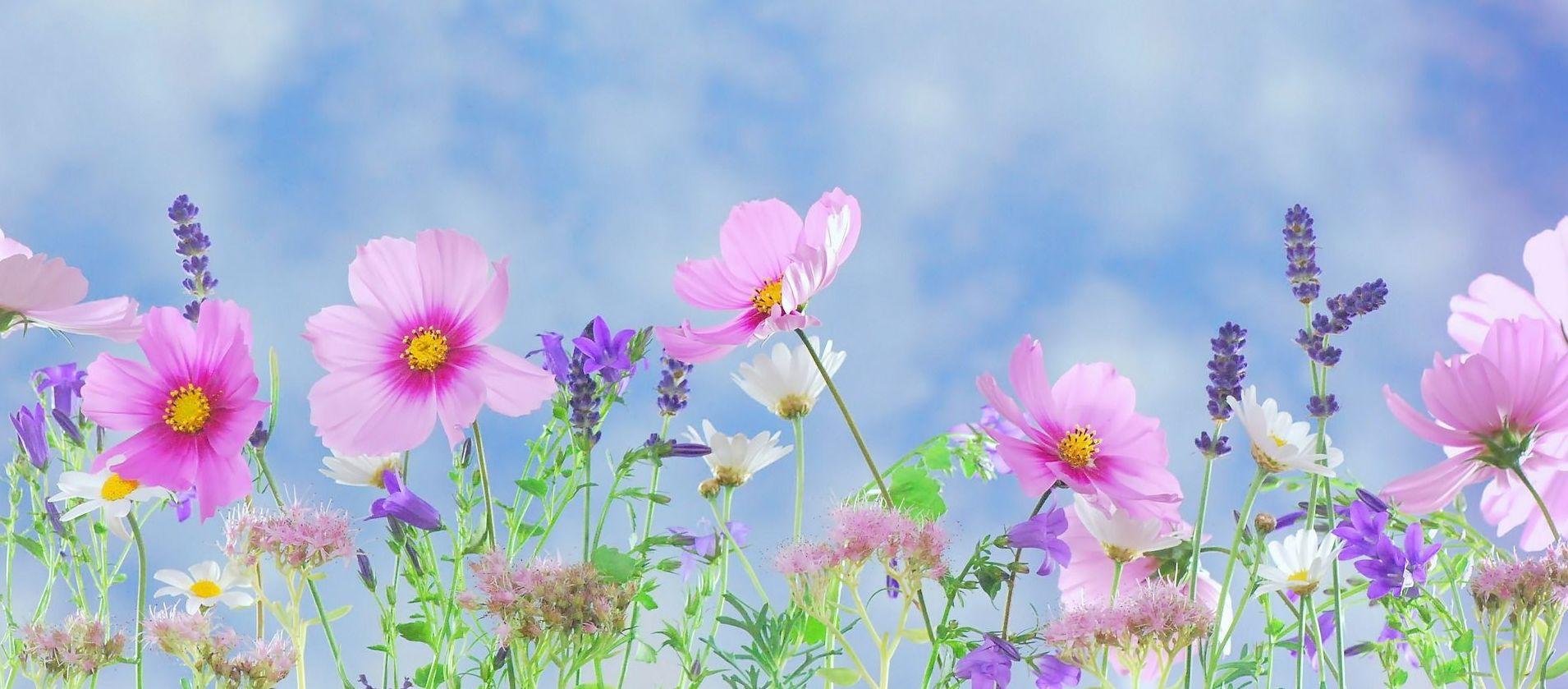 flor de llum