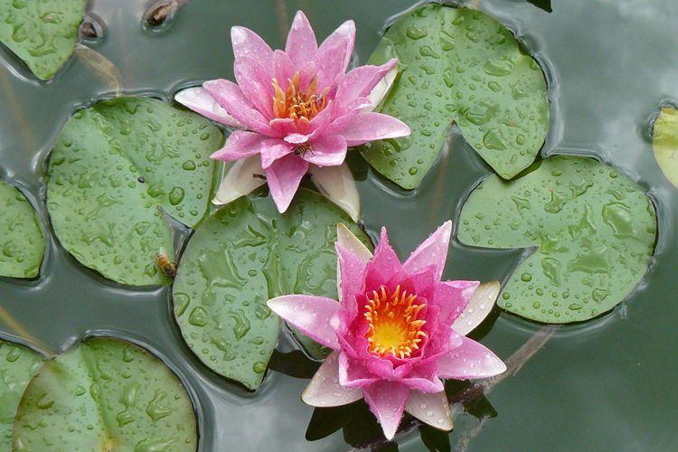 Psicoterapia con flores de Bach