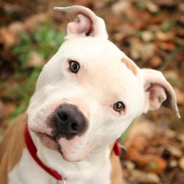 Licencia para perros peligrosos: Servicios de Centro Médico Renueva