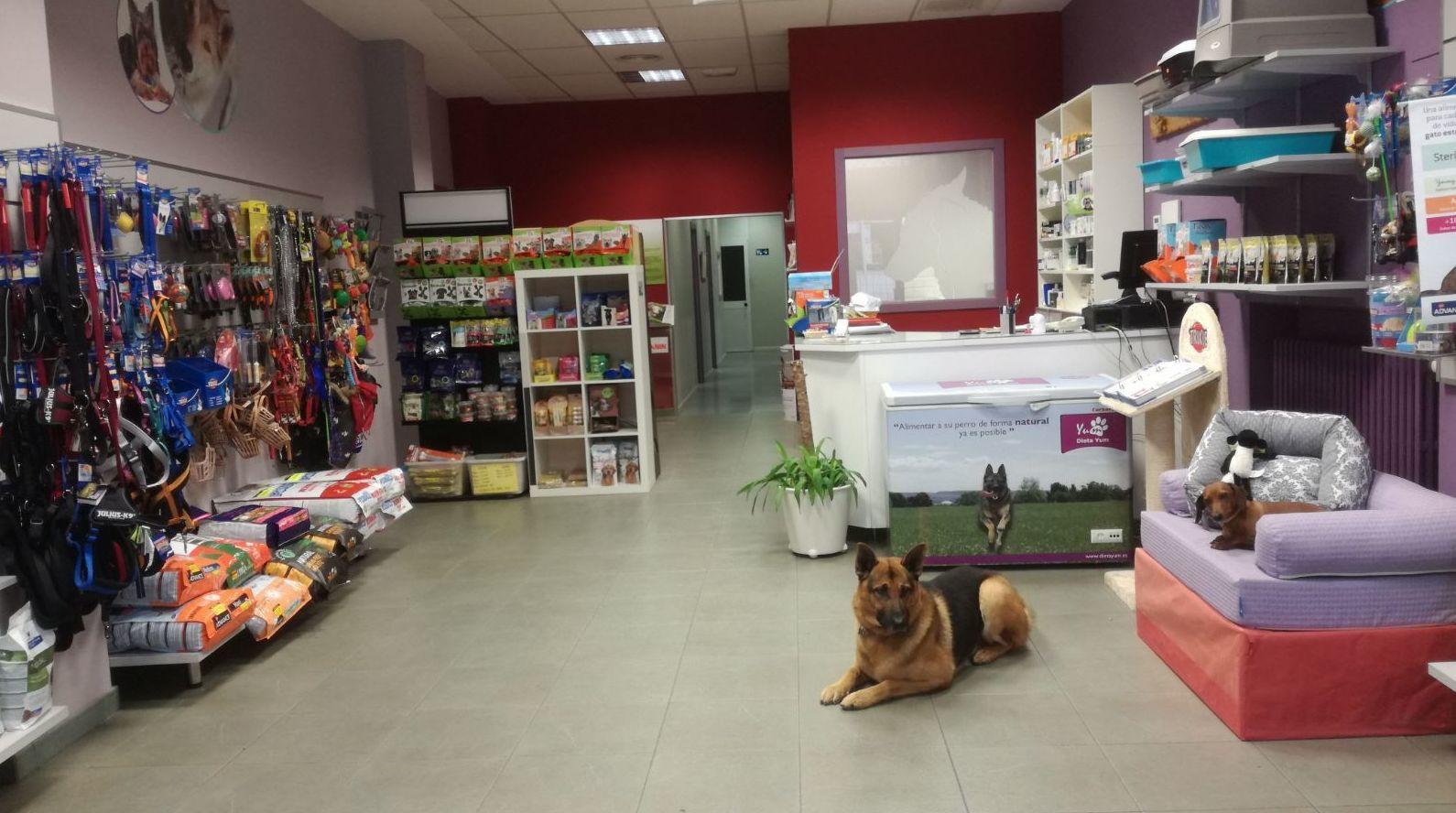 Tienda especializada, perro, gato, roedores y pájaros.