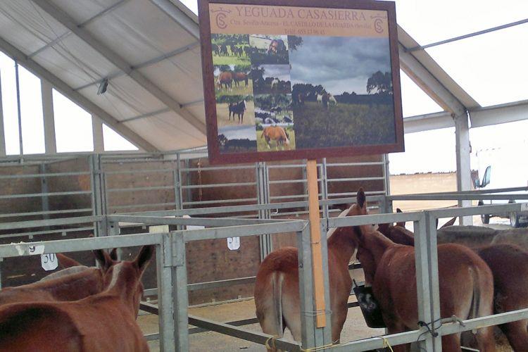 Control de plagas en ferias de ganado