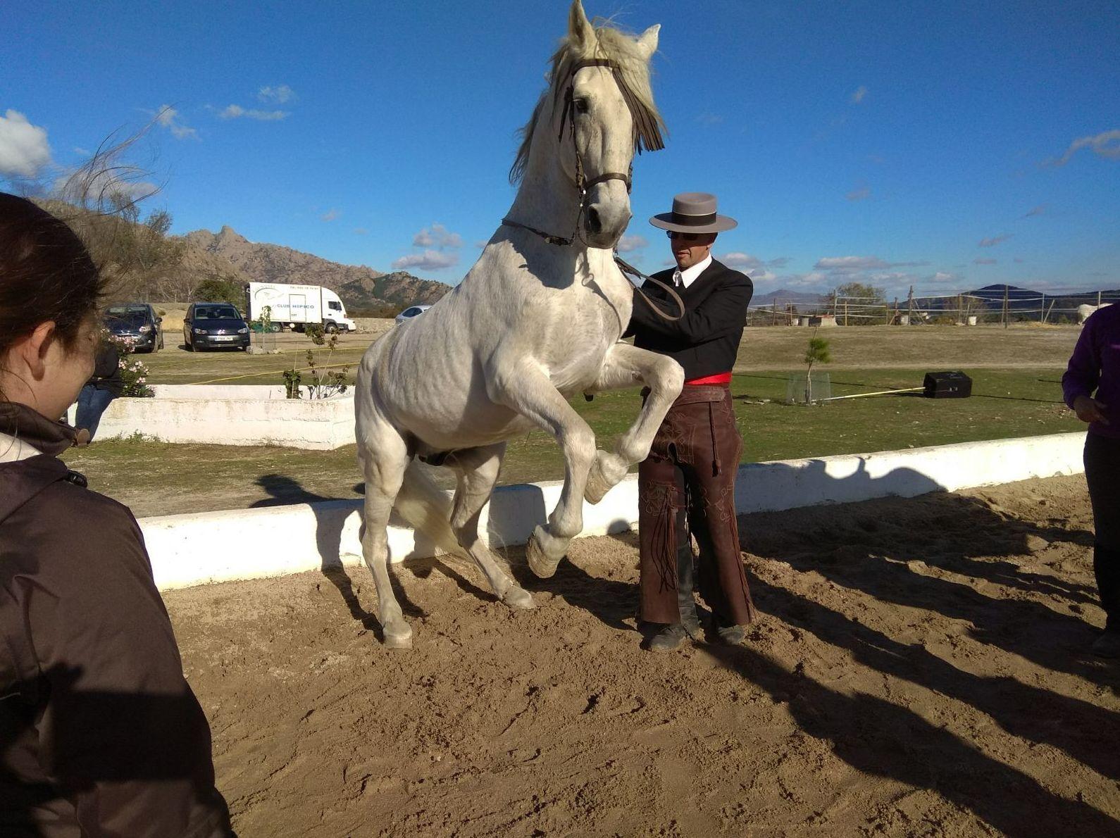 Foto 9 de Club hípico con servicio de pupilaje y veterinario en cerceda   Las Nieves Club Hípico