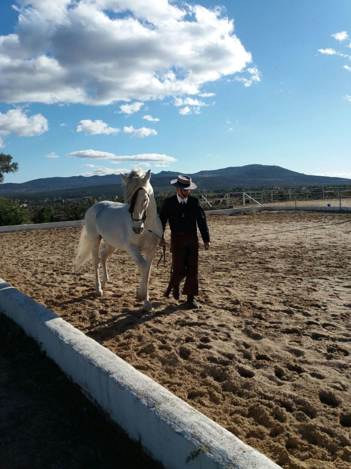 Foto 23 de Club hípico con servicio de pupilaje y veterinario en cerceda | Las Nieves Club Hípico