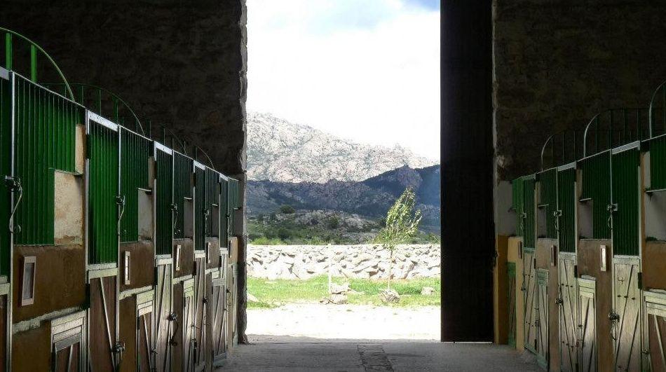 Cuidamos de tu caballo en Club Hípico Las Nieves