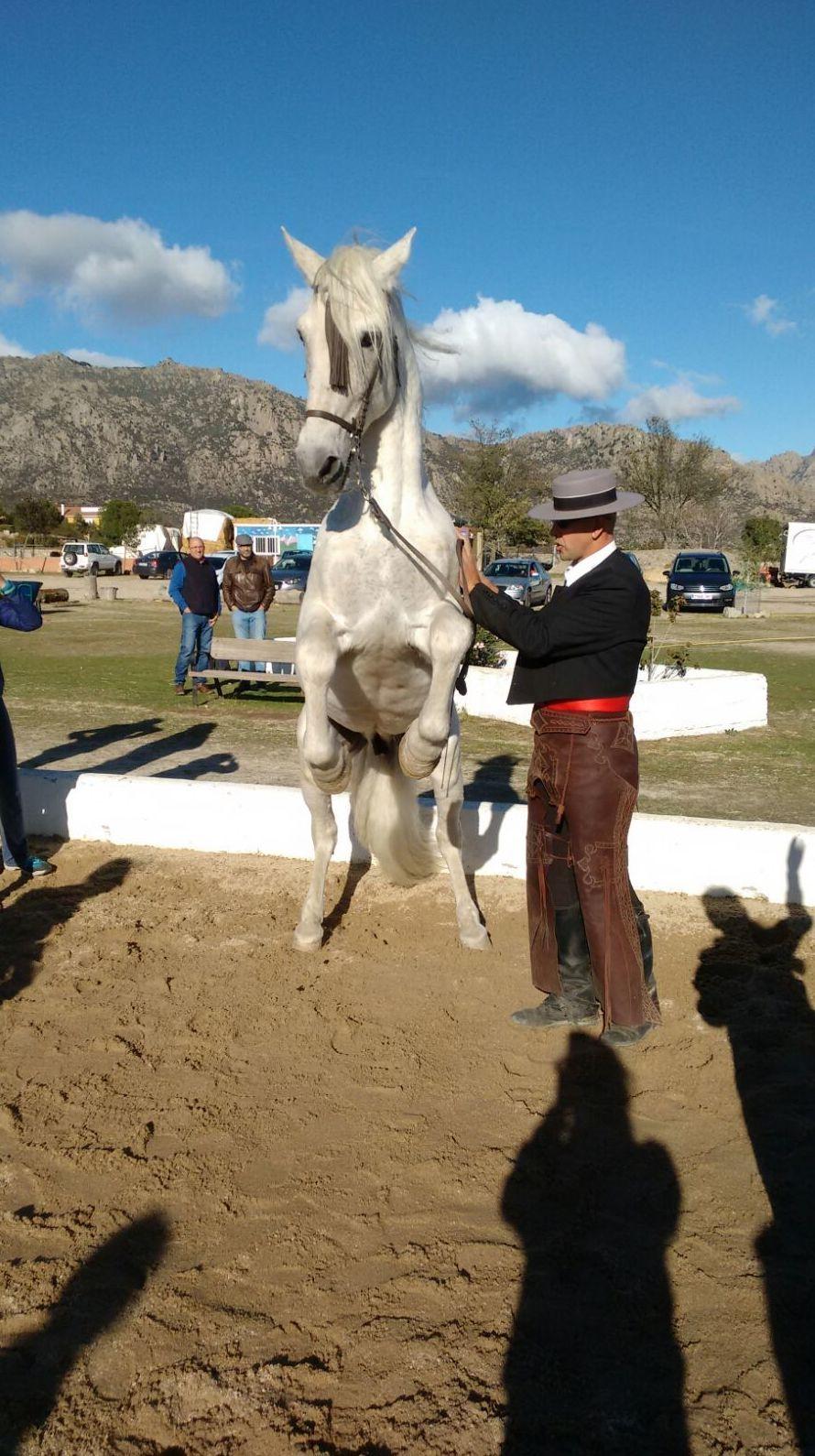 Foto 22 de Club hípico con servicio de pupilaje y veterinario en cerceda | Las Nieves Club Hípico