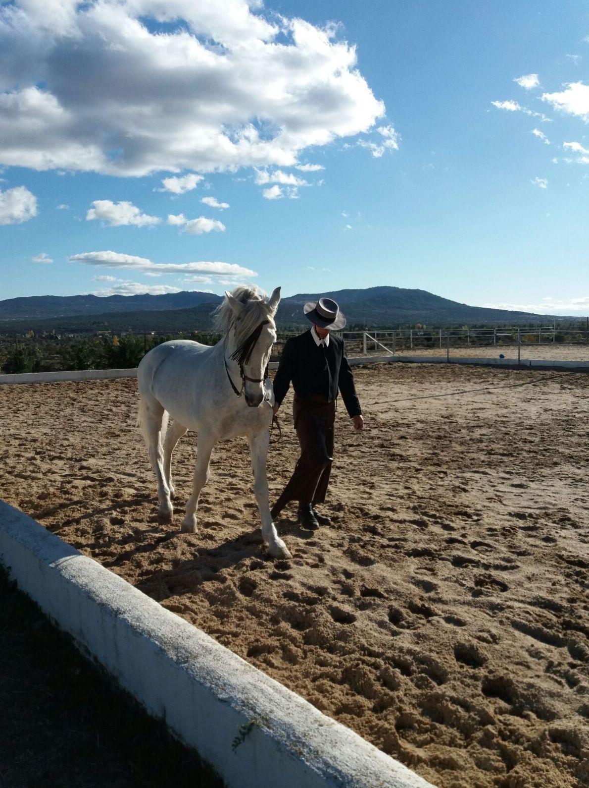 Foto 20 de Club hípico con servicio de pupilaje y veterinario en cerceda | Las Nieves Club Hípico