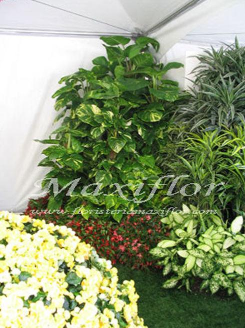 Flores para eventos en Tenerife
