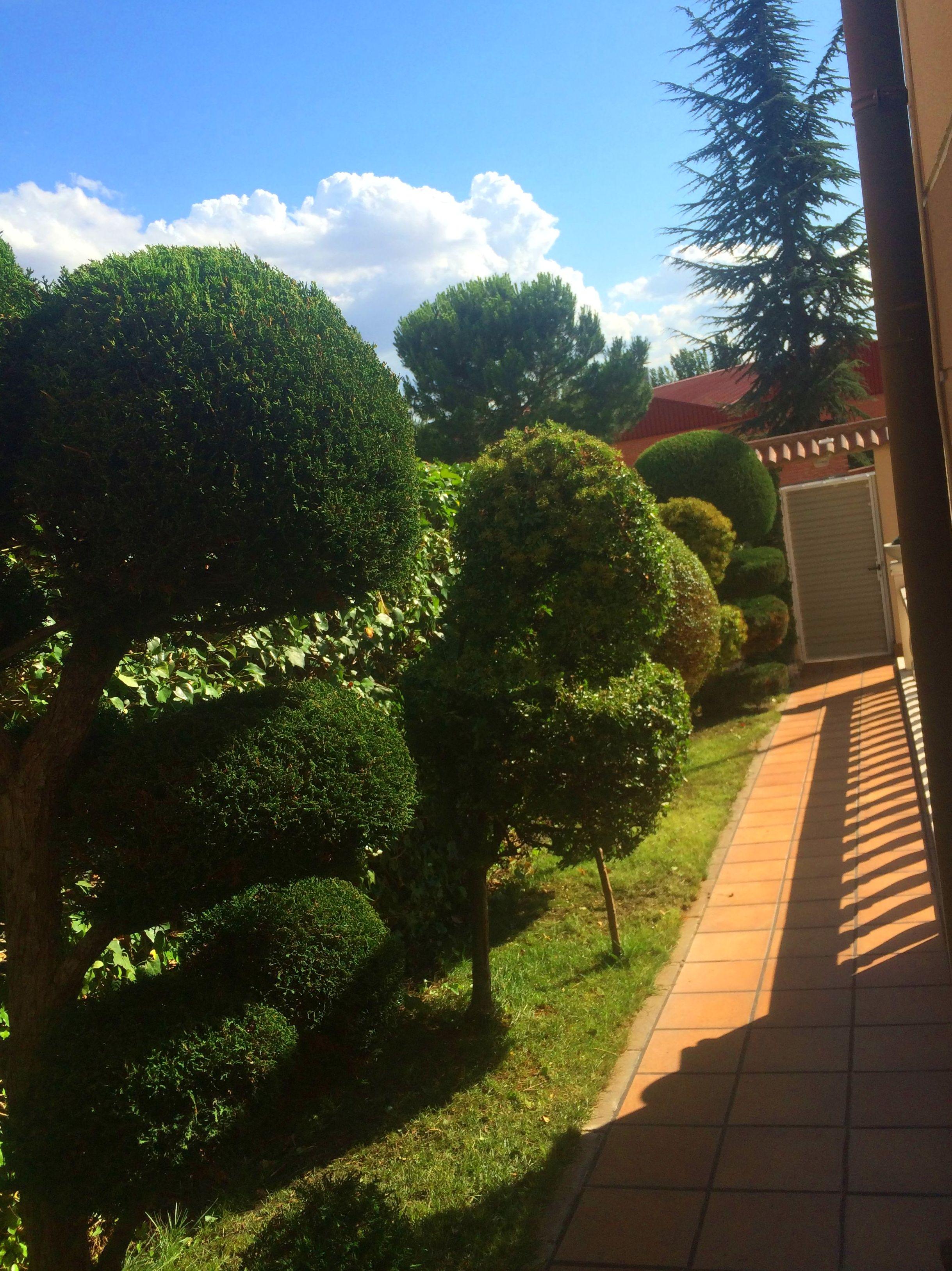 Foto 6 de Diseño y mantenimiento de jardines en Ávila | Jardinería FG