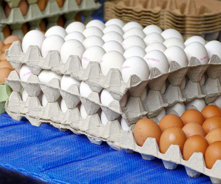 Distribución de huevos en Albacete