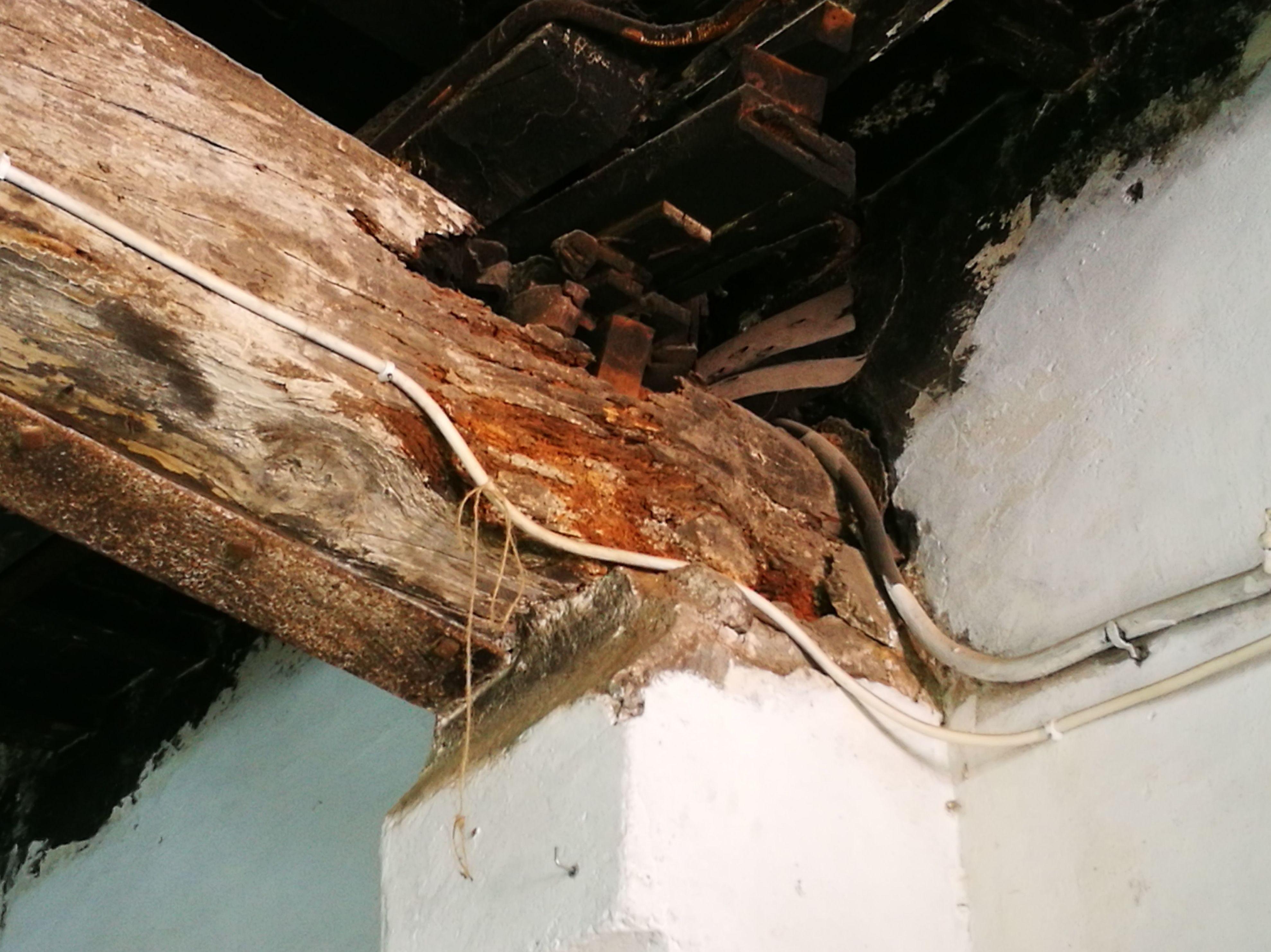 Foto 1 de Análisis y diagnosis de patologías en estructuras de madera en Girona   Helpest 21