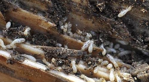 Foto 4 de Análisis y diagnosis de patologías en estructuras de madera en Cassà de la Selva | Helpest 21