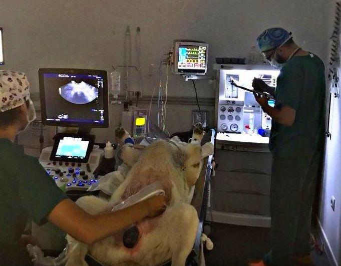 Anestesia y cirugía