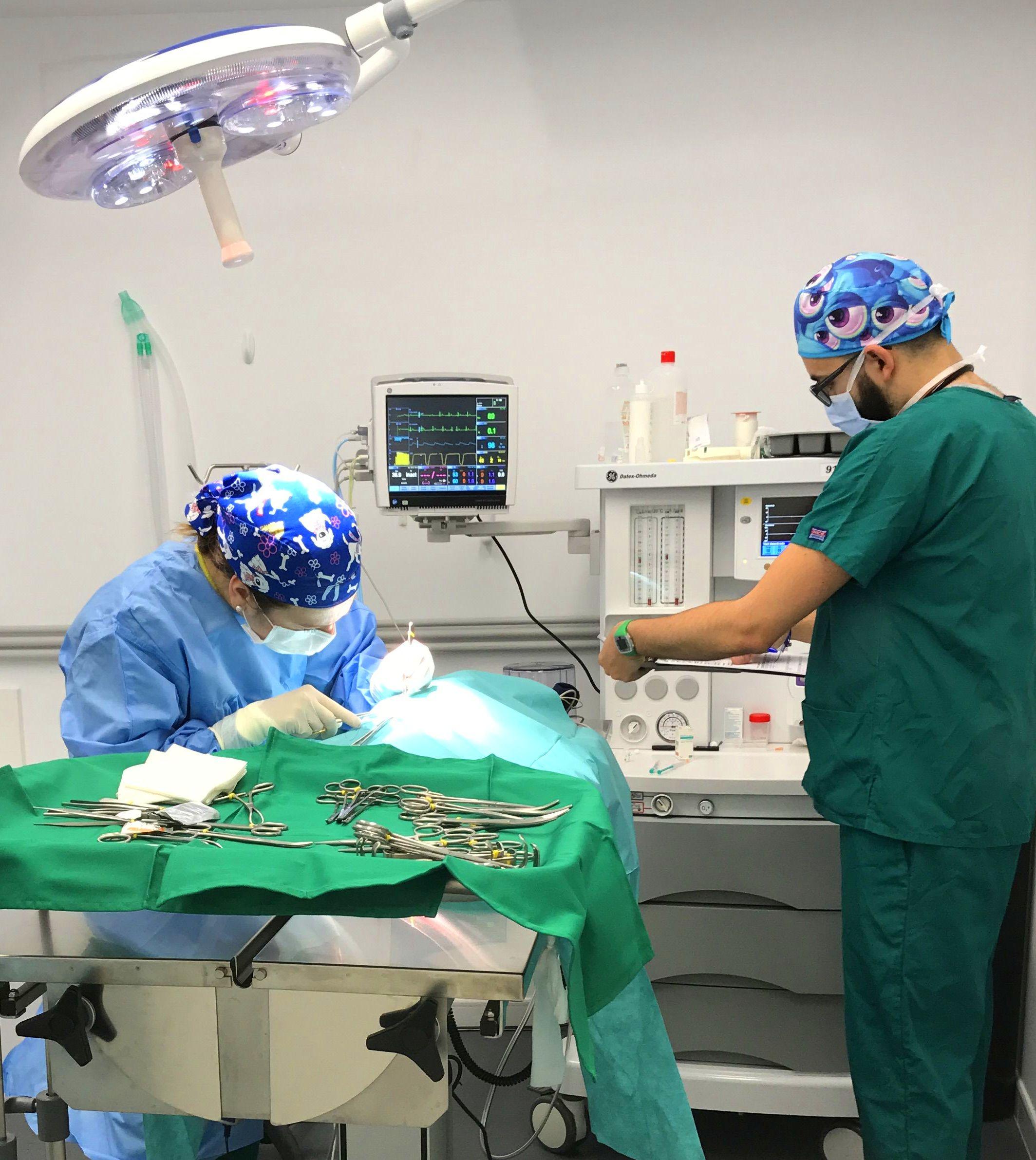Anestesia y cirugía: Servicios de La Chopera Hospital Veterinario